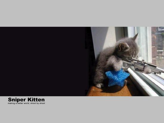 sniper-kitten.jpg